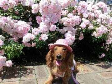 ピンク帽子2.jpg