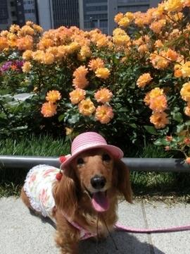 ピンク帽子3.jpg