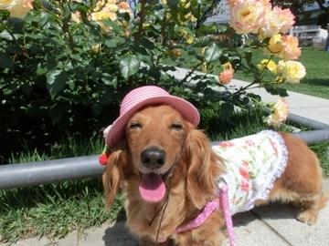 ピンク帽子5.jpg
