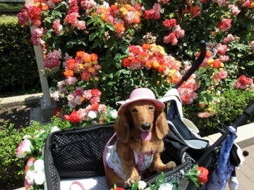 ピンク帽子7.jpg