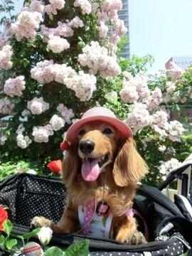 ピンク帽子8.jpg