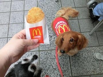 マクド犬2.jpg