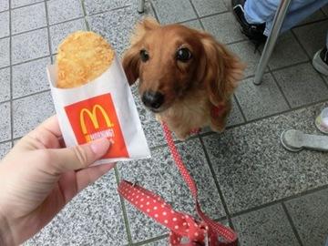 マクド犬3.jpg