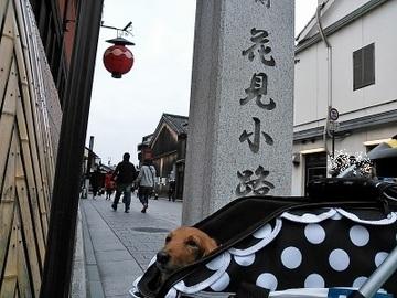 京都遠足②0.jpg