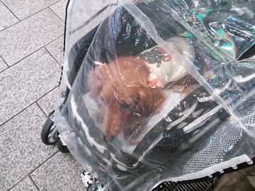 京都遠足②11.jpg