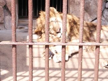 動物園12.jpg
