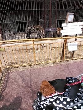 動物園13.jpg