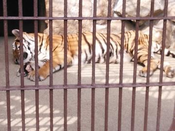 動物園7.jpg