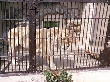 動物園8.jpg
