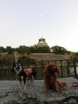 城灯り1.jpg