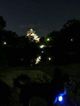城灯り5.jpg