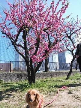 桃と芋3.jpg