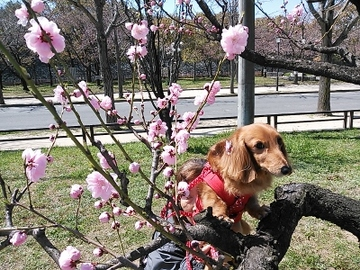 桃と芋5.jpg