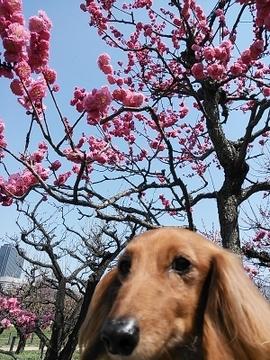梅と桃3.jpg
