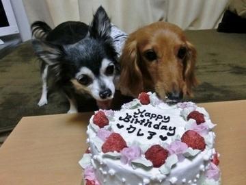 誕生日パーティー10.jpg