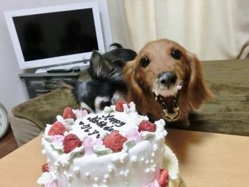 誕生日パーティー12.jpg