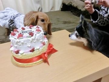 誕生日パーティー7.jpg