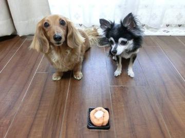 2ワンでロールケーキ2.jpg